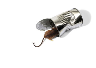 ネズミはどんな害獣なの?ネズミがもたらす被害についてご紹介します