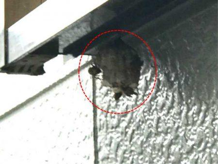 点検の際にアシナガバチの巣を確認しました。