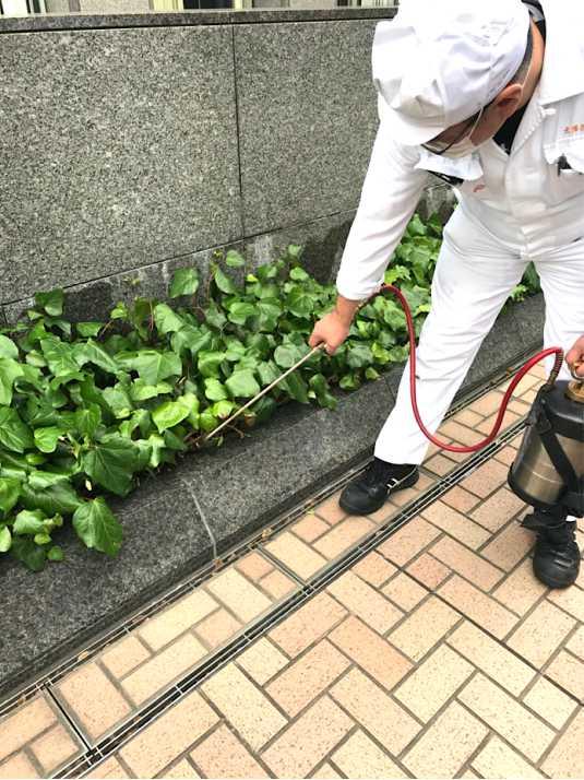 薬剤噴霧処理によるアリ駆除施工