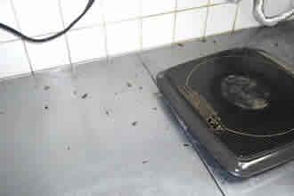 駆除された死骸や弱ったゴキブリが出て来ます。異物混入の無い様にご注意下さい。