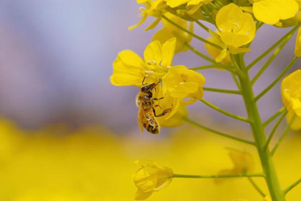 【神戸】ゴキブリ駆除をお考えの方必見!害虫の種類と駆除業者の選び方サムネイル