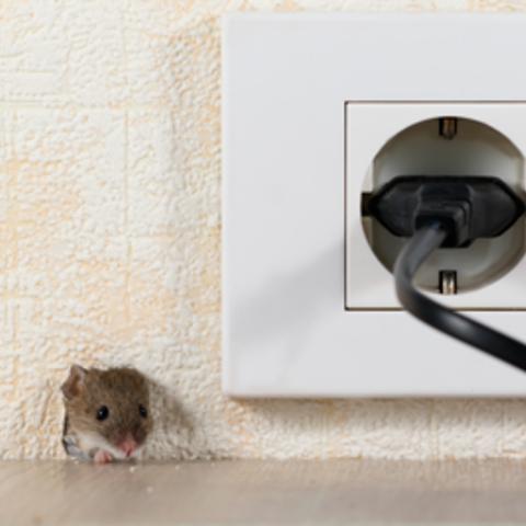 【大阪】ネズミが発生しやすい場所と駆除方法についてご紹介サムネイル