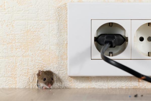 ネズミが発生しやすい場所と駆除方法についてご紹介サムネイル