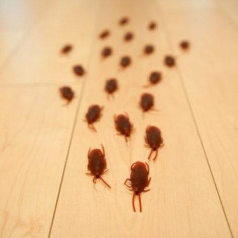 ゴキブリ駆除・対策のご相談に対応!ゴキブリが発生する原因と侵入経路・よく出る時期をご紹介サムネイル