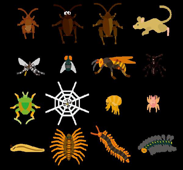 【神戸・大阪・京都】ゴキブリ駆除をお考えの方必見!害虫の種類と駆除業者の選び方サムネイル