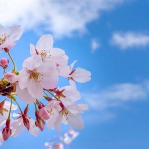 ゴキブリ駆除は春の対策こそ大事!季節ごとの生態や活動に応じたゴキブリ駆除・対策をご紹介サムネイル