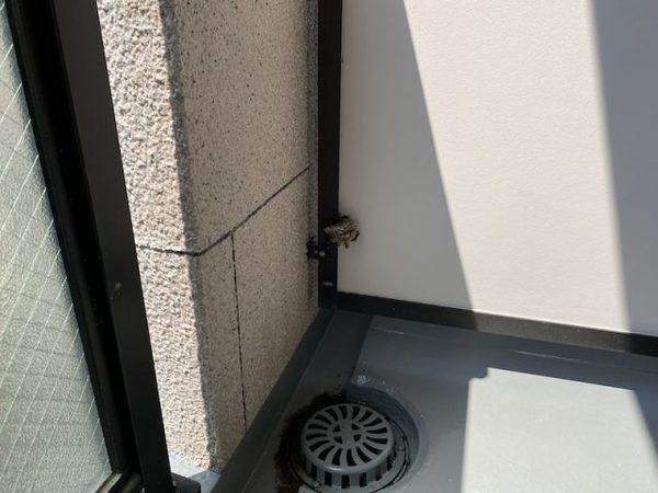 【ハチ駆除】神戸市内 某マンション アシナガバチ駆除施工サムネイル