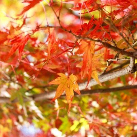 ゴキブリ駆除には「秋」の対策こそが肝心要!!ゴキブリを翌年に持ち越さない!季節の活動に応じたゴキブリ対策をご紹介!サムネイル